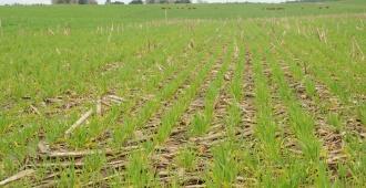 Normativa que mejora producci�n de soja permitir� el acceso a otros mercados