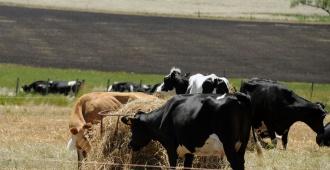 Acuerdo con China en materia agropecuaria