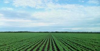 Producción de soja fue estimada en 3,338 millones de toneladas