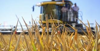 Producción brasileña de granos debe caer un 8,9% en 2018, según el Gobierno