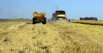 Argentina prevé cosecha agrícola récord de 140 millones de toneladas