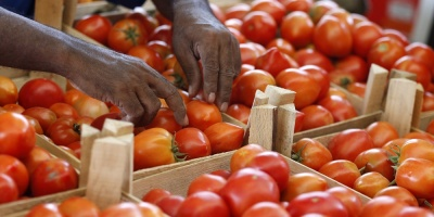 Precio de los tomates descenderá recién en noviembre