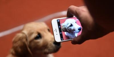 Los perros tienen más memoria de lo que se creía