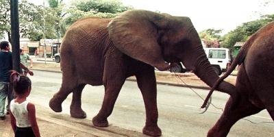 La humanidad empieza a tomar en serio la masacre de elefantes
