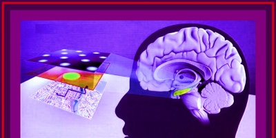 Un insólito museo en Perú invita a escudriñar el cerebro humano