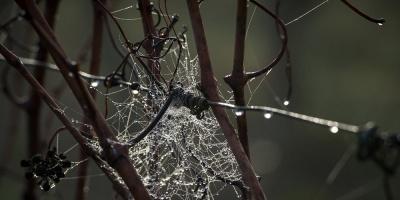 Investigadores logran producir artificialmente seda de araña