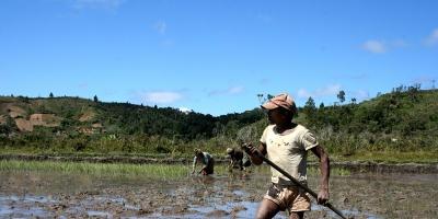 Emergencia alimentaria en la isla africana de Madagascar, arrasada por la sequía.