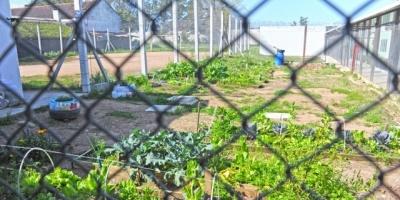 Yamandú Orsi reclamó legislar sobre contaminación generada por emprendimientos productivos