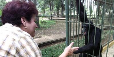 Un zoo de Japón sacrifica 57 monos para proteger una especie indígena