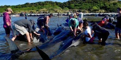 Japón mata 333 ballenas en su polémica campaña anual en el Antártico