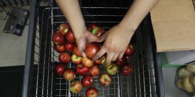 """Confirman que deben """"descartar"""" 15 millones de kilos de manzana"""
