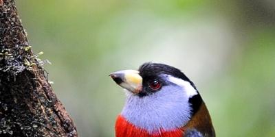 Costa Rica busca posicionarse como destino para observadores de aves