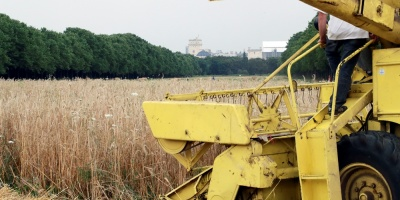 Rusia apunta a exportaciones de cereales récord a pesar de una cosecha en baja