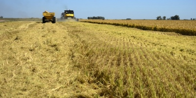 Continua la producción de soja no transgénica tras primer año positivo