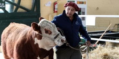 Cambios en ADN de animales domesticados, afectarían el futuro de agricultura