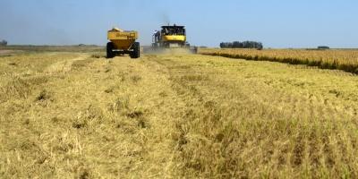 Suministros Argentina y Brasil reducen precios maíz en la región