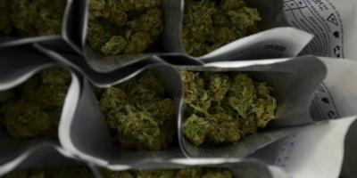 Paraguay estudiará legalización de marihuana medicinal