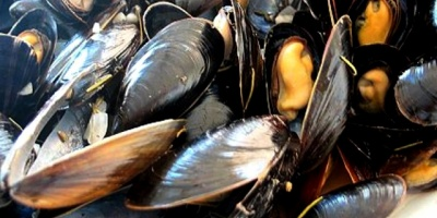 Mantienen la prohibición de consumo de mejillones y berberechos en costas de Rocha