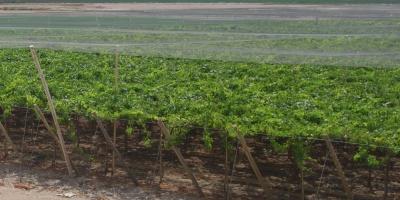 La cosecha brasileña se reducirá un 6,8 % en 2018 tras el récord de 2017