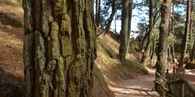 Experta vincula la lucha contra la deforestación con el bienestar humano