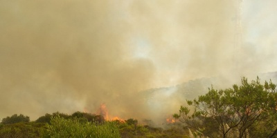 Bomberos logra controlar incendio forestal en el Cerro del Verdún