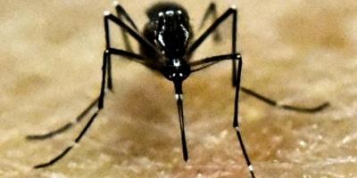 Confirmaron dengue importado en Dolores