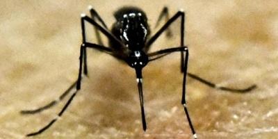 Se confirmó el primer caso de Dengue importado en Artigas