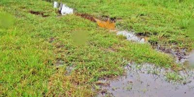 La FAO alerta por creciente en la contaminación del suelo