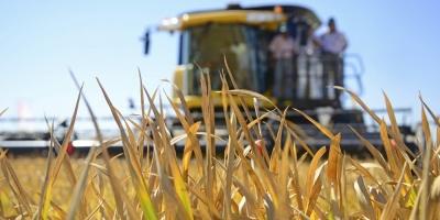 Gobierno afirma que 13.100 productores agropecuarios se han beneficiado