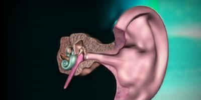 Crean un nuevo implante coclear basado en la luz y probado en roedores