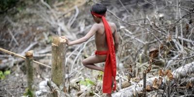 Mineros deforestan 1.700 hectáreas de Amazonía peruana entre enero y junio
