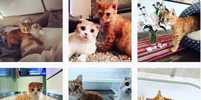 Ed Sheeran hace Instagram a sus gatos, Dorito y Calippo