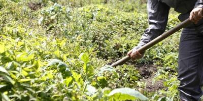 La cosecha de granos en Brasil caerá un 6,2 % este año