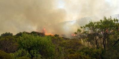Sube a 200 hectáreas el área afectada por incendio en reserva natural de Perú