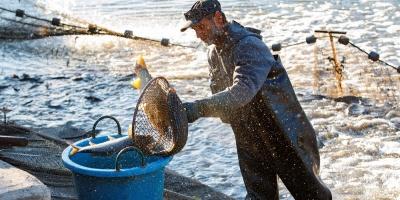 """La industria pesquera cree será una de las grandes beneficiarias del """"brexit"""""""