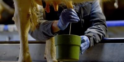 """Trabajadores consideraron """"una verdadera locura"""" venta de CONAPROLE"""