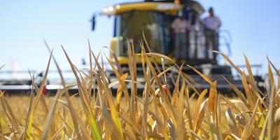 Estiman que próxima cosecha de trigo tendrá rendimiento histórico
