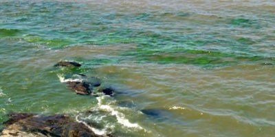 Se confirmó la presencia de cianobacterias en la playa Mansa de Punta del Este