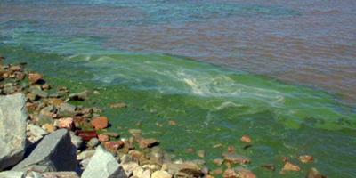 Playas de Montevideo están libres de cianobacterias, según la Intendencia