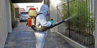 Dispositivos buscan constatar presencia de Aedes aegypti en Municipio CH