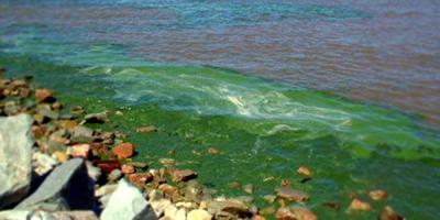 Volvieron las cianobacterias a 7 playas de Montevideo
