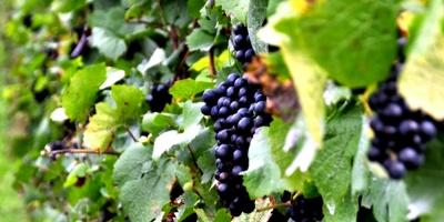 """El Instituto Nacional de Vitivinicultura exigirá una """"garantía autenticidad"""" en vinos importados"""