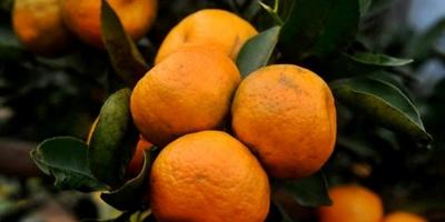 Siguen las negociaciones en apoyo a los trabajadores de la empresa citrícola salteña Caputto