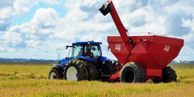 Productores advierten por baja competitividad en el sector del arroz