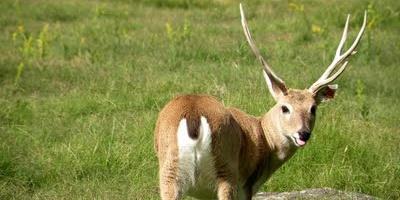 Multas por cazar animales protegidos ascienden a más de $170 mil