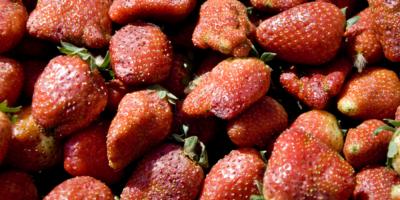 Exportaciones chilenas de fruta crecen un 9,87 % en la temporada 2018-2019