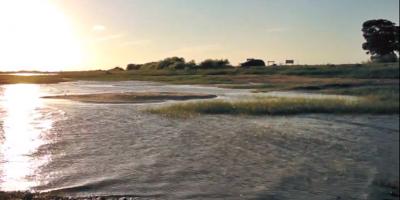 Aparecieron cianobacterias en la Laguna Merín, departamento de Cerro Largo