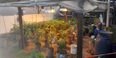 Se incautaron 244 plantas de marihuana y un arma en Piriápolis