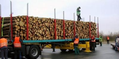 Transportista de madera fue agredido en piquete sindical de UPM
