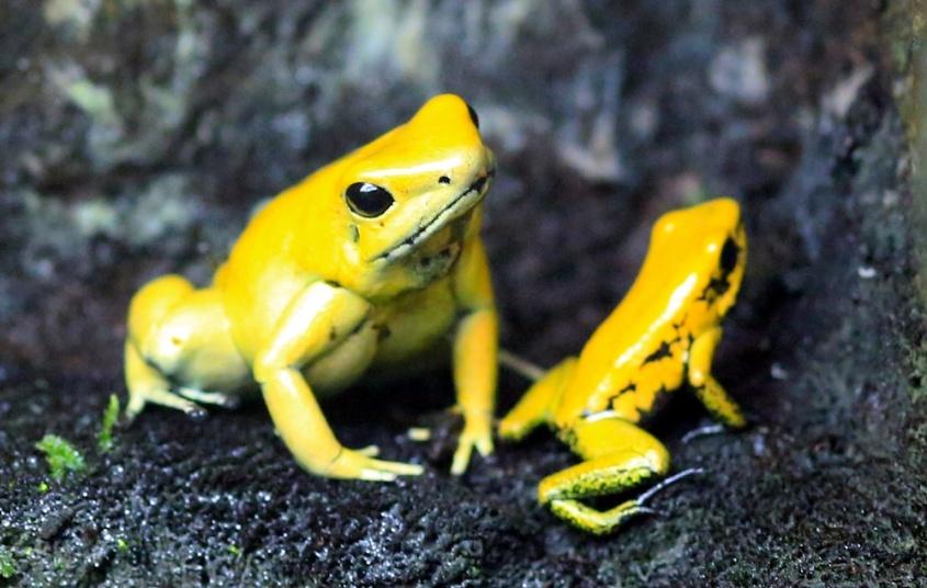 Investigan muerte de 10 mil ranas en río